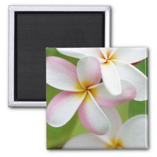 Plumeria Frangipani Hawaii Flower Customized Blank Magnet