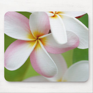 Plumeria Frangipani Hawaii Flower Customized Blank Mouse Mat