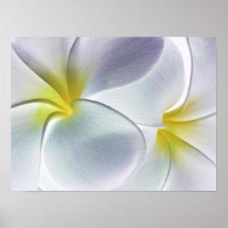 Plumeria Frangipani Hawaii Flower Customized Blank Poster
