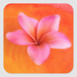 Plumeria Frangipani Hawaii Flower Customized Blank Square Sticker