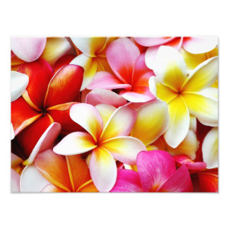 Plumeria Frangipani Hawaii Flower Customized Photographic Print