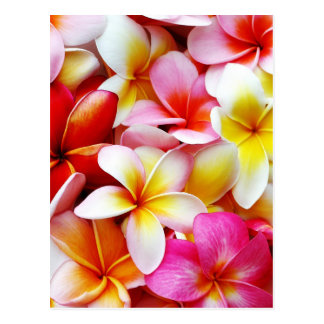 Plumeria Frangipani Hawaii Flower Customized Postcard