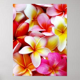 Plumeria Frangipani Hawaii Flower Customized Poster