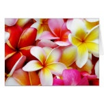 Plumeria Frangipani Hawaii Flower Hawaiian Flowers