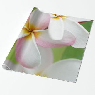 Plumeria Frangipani Hawaii Flower Hawaiian Flowers Wrapping Paper