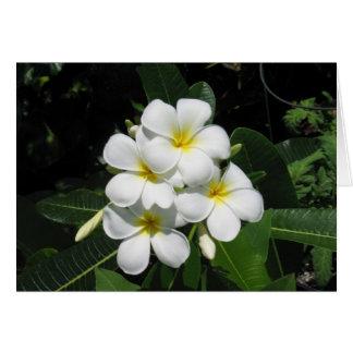 Plumeria Hawaiian Flower Photo on Note Card