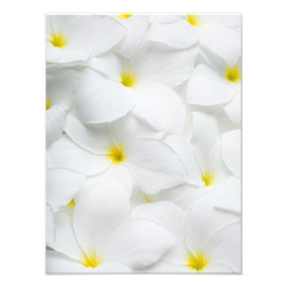 Plumeria Lei Flowers Personalized Hawaiian Flower Photographic Print