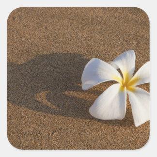 Plumeria on sandy beach, Maui, Hawaii, USA Square Sticker