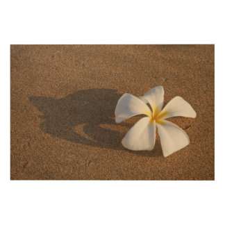 Plumeria on sandy beach, Maui, Hawaii, USA Wood Wall Decor