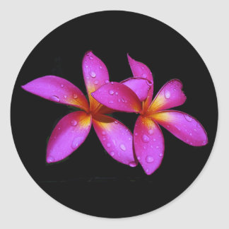 Plumeria purple on black background round sticker
