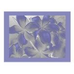 Plumeria Shadows Blue and Grey Postcard