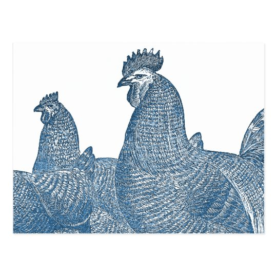 Plymouth Rock Chickens Antique Blue Rooster Hens Postcard