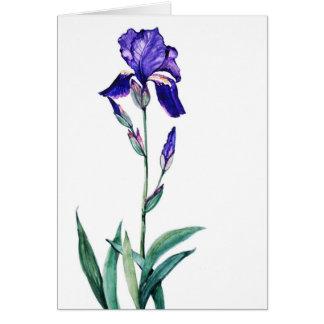 PMACarlson Garden   Iris Card