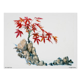 PMACarlson  Red Maple Bonsai Poster