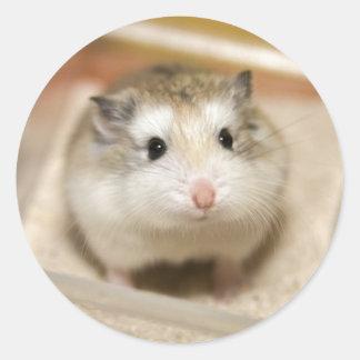 PMT the baby hamster: Stare Classic Round Sticker