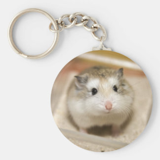 PMT the baby hamster: Stare Key Ring