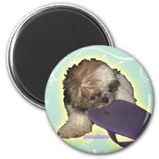 Pochi & Purple Flipflops Magnet