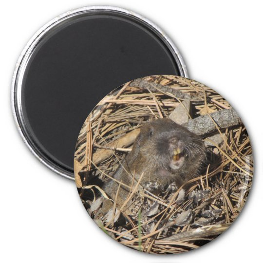 Pocket Gopher 6 Cm Round Magnet