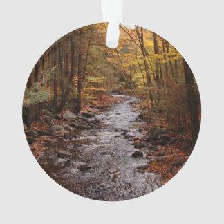 Pocono Stream in Autumn
