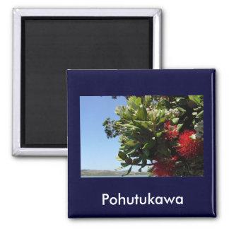 Pohutukawa Tree and Blossom Magnet