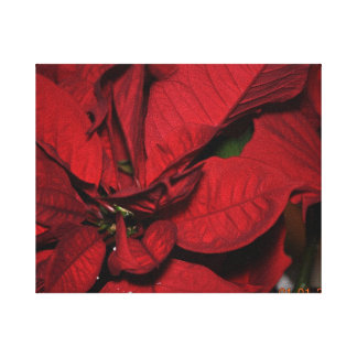 poinsetta gallery wrapped canvas
