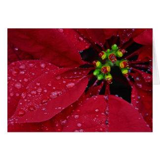 Poinsetta Happy Holidays Card