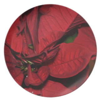 Poinsetta Party Plate
