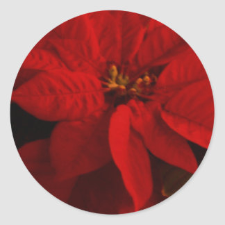 Poinsetta Round Sticker