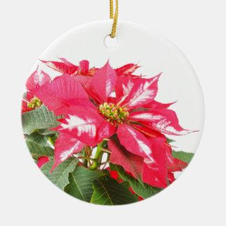 Poinsettia Christmas star Round Ceramic Decoration