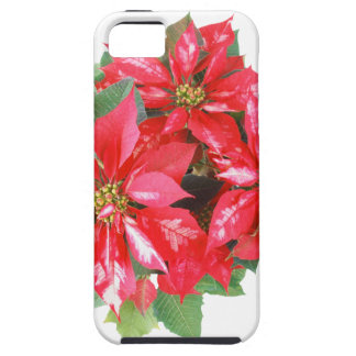 Poinsettia Christmas Star transparent PNG iPhone 5 Cover