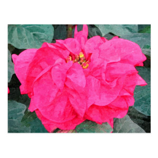 Poinsettia Holiday Postcard