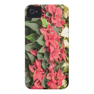 Poinsettia iPhone 4 Cases