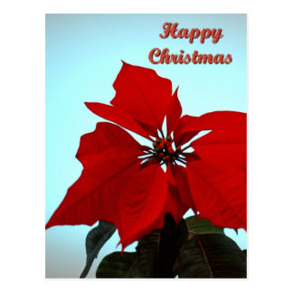 Poinsettia Post Cards