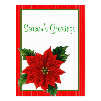 Poinsettia Postcard