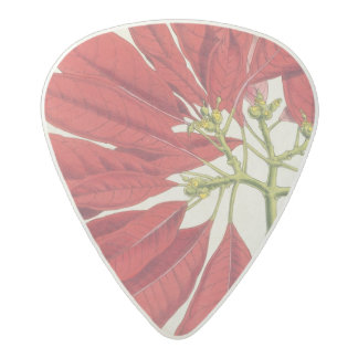 Poinsettia Pulcherrima (colour litho) Acetal Guitar Pick