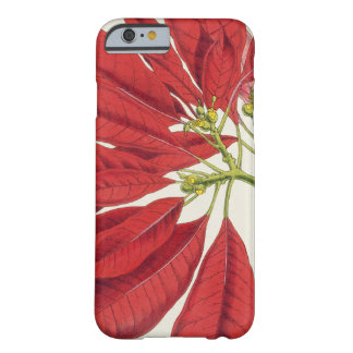 Poinsettia Pulcherrima (colour litho) Barely There iPhone 6 Case