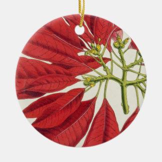 Poinsettia Pulcherrima (colour litho) Christmas Ornament