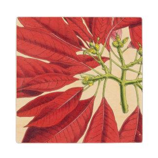 Poinsettia Pulcherrima (colour litho) Wood Coaster