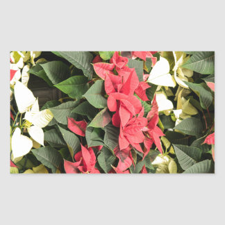 Poinsettia Rectangular Sticker