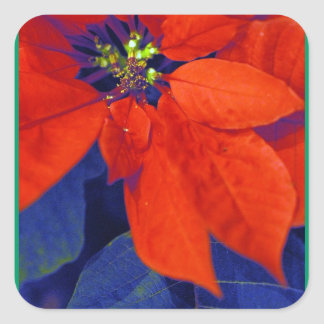 Poinsettia Stickers
