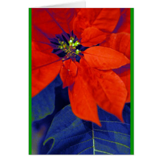 Poinsettias and blue leaves card