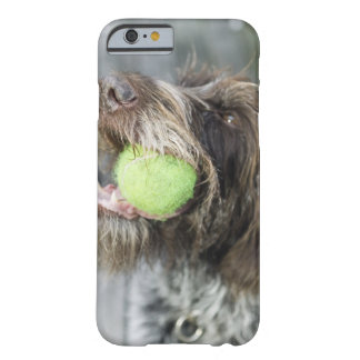 Pointer dog biting tennis ball, close-up barely there iPhone 6 case