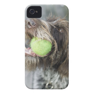 Pointer dog biting tennis ball, close-up Case-Mate iPhone 4 cases