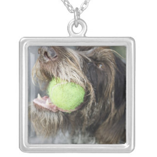 Pointer dog biting tennis ball, close-up silver plated necklace