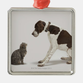 Pointer looking down at cat christmas ornament