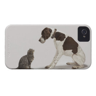 Pointer looking down at cat iPhone 4 case
