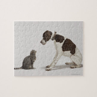 Pointer looking down at cat jigsaw puzzle