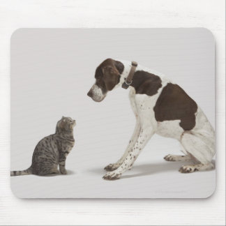 Pointer looking down at cat mouse mat