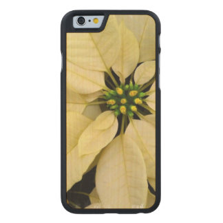pointsettia-3 carved® maple iPhone 6 case