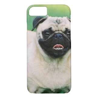 Poised Pug iPhone 7 Case